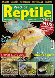 No.27 Coloured Iguanas issue No.27 Coloured Iguanas
