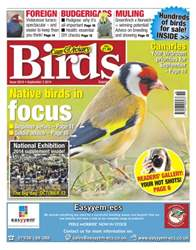 No.5819 Native birds in focus issue No.5819 Native birds in focus