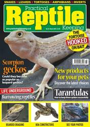 No.72 Scorpion Geckos issue No.72 Scorpion Geckos