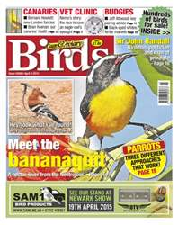 No.5849 Meet the Bananaquit issue No.5849 Meet the Bananaquit